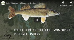 a walleye with text underneath