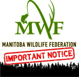 mwf logo and important notice text
