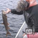 man leaning over boat gunnels and holding a lake trout